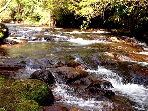 Kaiate Scenic Reserve and Rerekawau Falls near Tauranga